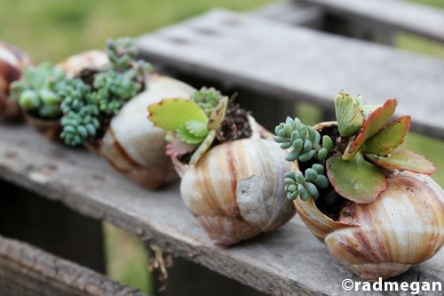 shell planters