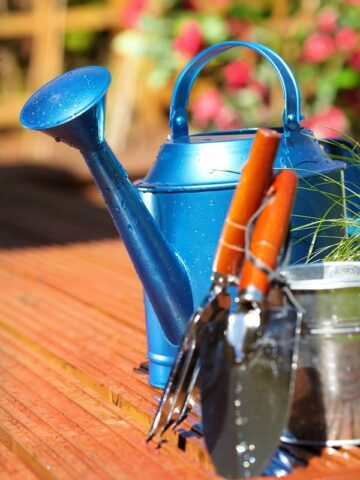 A blue watering can with gardening tools